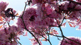 La Primavera se hace sentir en Paraná