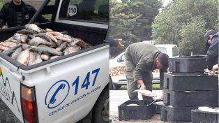 Decomisaron más de 300 kilos de pescado