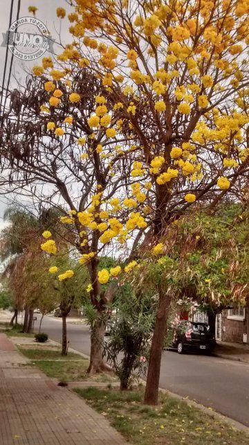 El color de la primavera en calle Pellegrini