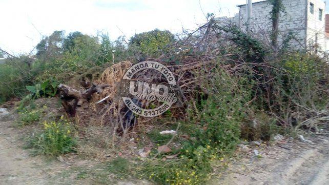 Accesos al Parque Gazzano sitiados por los minibasurales