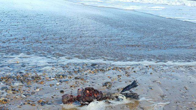 Video: Asegura haber descubierto el cadáver de una sirena
