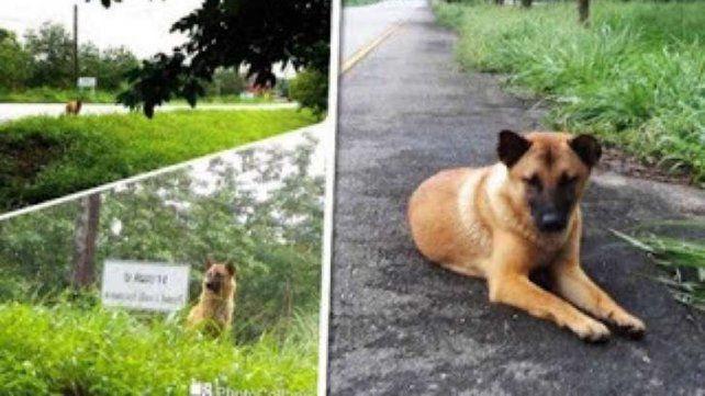 Un perro murió esperando a sus dueños en el mismo lugar donde lo abandonaron