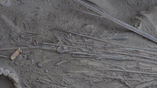 Hallan plantas de cannabis bien conservadas en una tumba de hace 2.000 años
