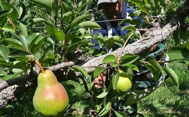 Precios de productos agrícolas se multiplicaron por 4,9 veces en septiembre, del campo a la góndola