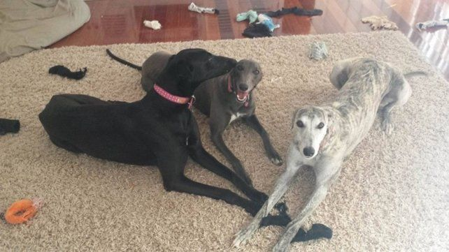 Una perrita perdió a su mejor amiga y la extrañó por varios días