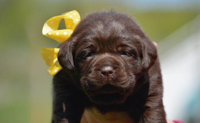 Ministerio de Bullrich busca nombres para cachorros policías