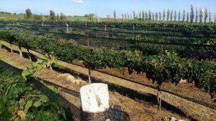 Nuevos paisajes. Los viñedos entre lomadas son también una atracción para turistas y delegaciones de estudiantes.