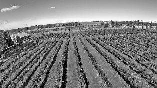 Los viñedos entrerrianos en los caminos del conocimiento