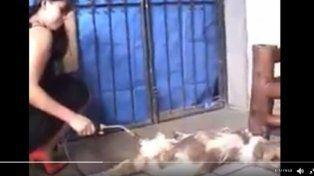 Aberrante: quemó vivo a un perro