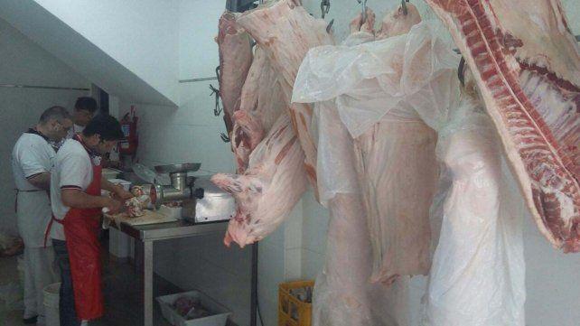 Decomisan cerdos y secuestran yegua
