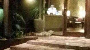 Rescataron a un yacaré en el hall de un lujoso hotel