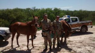 Las yeguas recuperadas son utilizadas para jugar al polo. Foto Departamental de Gualeguaychú.