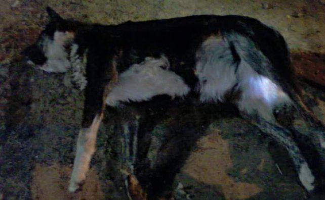 Vecinos denunciaron la violación, tortura y asesinato de una perra, en Concordia