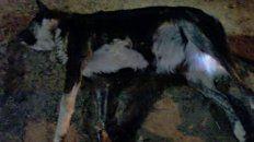 vecinos denunciaron la violacion, tortura y asesinato de una perra, en concordia