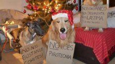 concejales se reunieron con protectoras de animales por regulacion de la pirotecnia