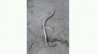 Serpentario en calle Roberto Satler