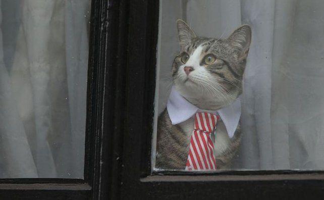 El gato le quitó el protagonismo a Julian Assange
