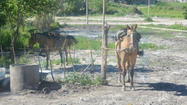 Un hombre que cuida caballos con pasión, amor y dedicación