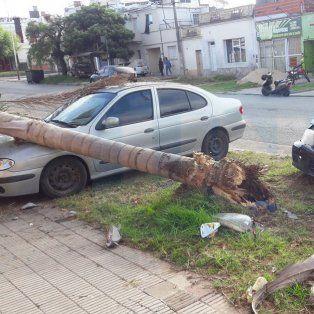 en argentina mueren 21 personas por dia en accidentes de transito