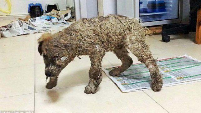 La increíble historia de Pascal, el perrito que sobrevivió