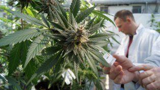 El uso medicinal del aceite de cannabis llega al Congreso de la Nación