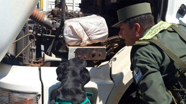 Ingenioso. El can detector de narcóticos fue utilizado por Gendarmería para descubrir la droga.