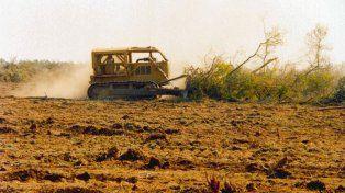 Por deforestación, en siete años se perdió una superficie equivalente a Jujuy