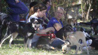 Más de 270 mascotas fueron esterilizadas durante el 2016 en Urdinarrain