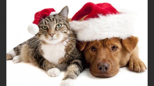 ¿Cómo afecta la pirotecnia a las mascotas?