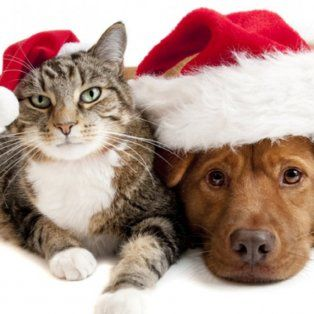 ¿como afecta la pirotecnia a las mascotas?