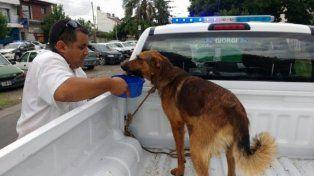 Detuvieron a dos hombres por atar perro a un vehículo y hacerlo correr