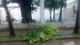 En Chajarí el viento provocó sólo caída de ramas