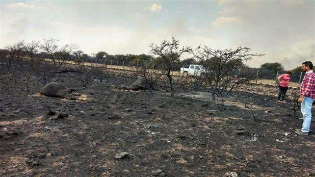 Los incendios en el centro del país destruyeron más de un millón de hectáreas