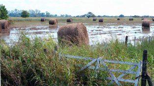 Producción castigada. La lluvia golpeó a los sectores agropecuarios y ganaderos de las provincias.