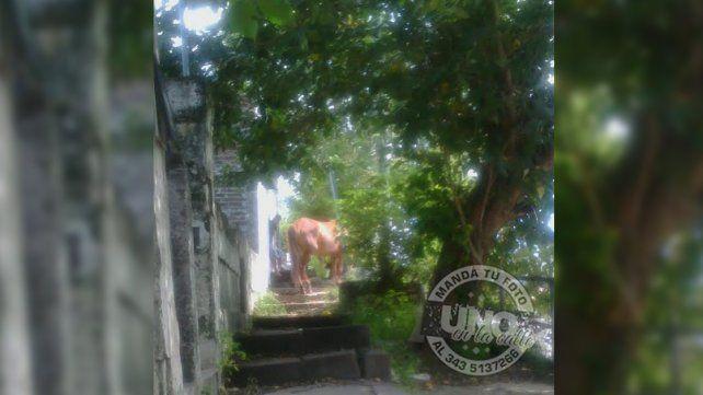 No pueden salir a la calle porque el vecino ata un caballo en la vereda