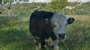 Desde 2011 que no se comía tan poca carne de vaca en Argentina