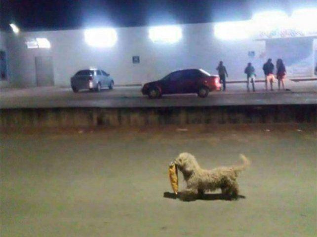 Un perro se hizo famoso en medio de los saqueos