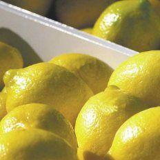 Trump suspendió la importación de limones argentinos