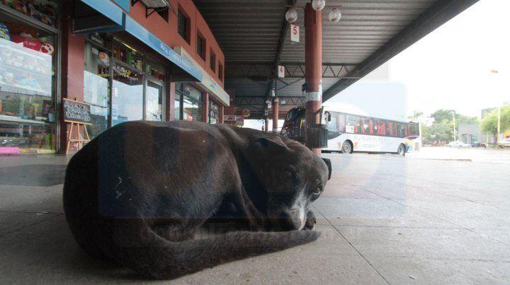 Proponen adiestrar perros callejeros para entregarlos a bomberos, policías y personas con discapacidad