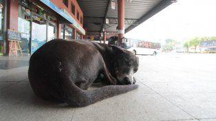 Santa Fe: podría haber descuentos impositivos por adoptar perros callejeros