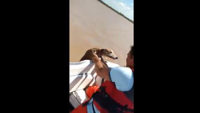 Así rescataron un perro que había sido arrojado al río Paraná