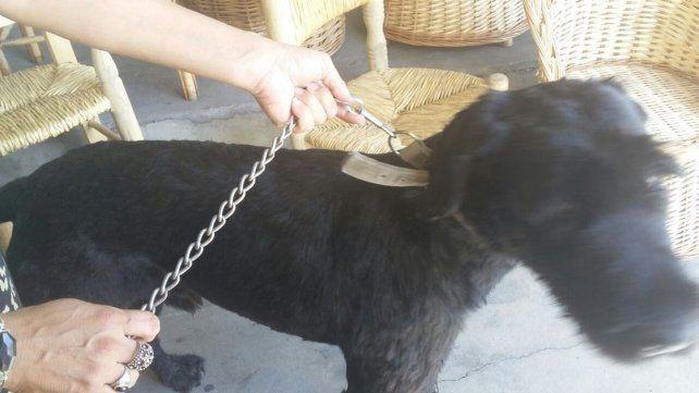 Buscan a los dueños de este perro perdido