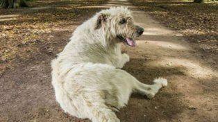 Este perro la tiene más larga que todos