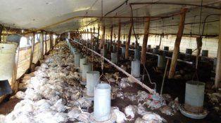 La tormenta provocó la muerte de miles de pollos en zonas rurales