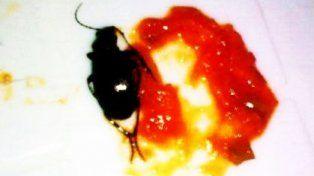 Encuentra insecto en el puré de tomates