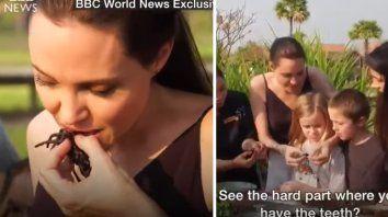 video: angelina jolie comio tarantulas y escorpiones