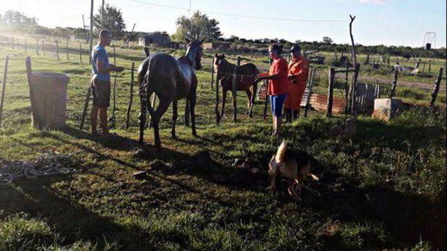 Rescataron con vida a una yegua que cayó en un pozo negro