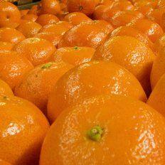La mandarina mantiene diferencias alarmantes entre el precio de origen y el de góndola, de 19 veces.