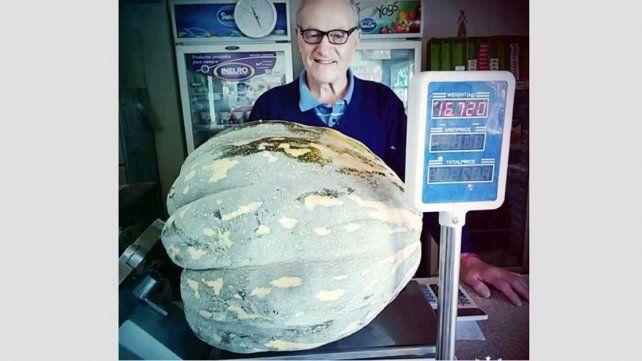 Cosechan un zapallo guacho de casi 17 kilos