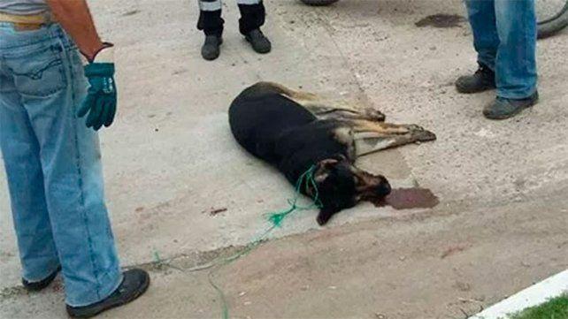 Alarma en los vecinos por la aparición de perros envenenados en Seguí